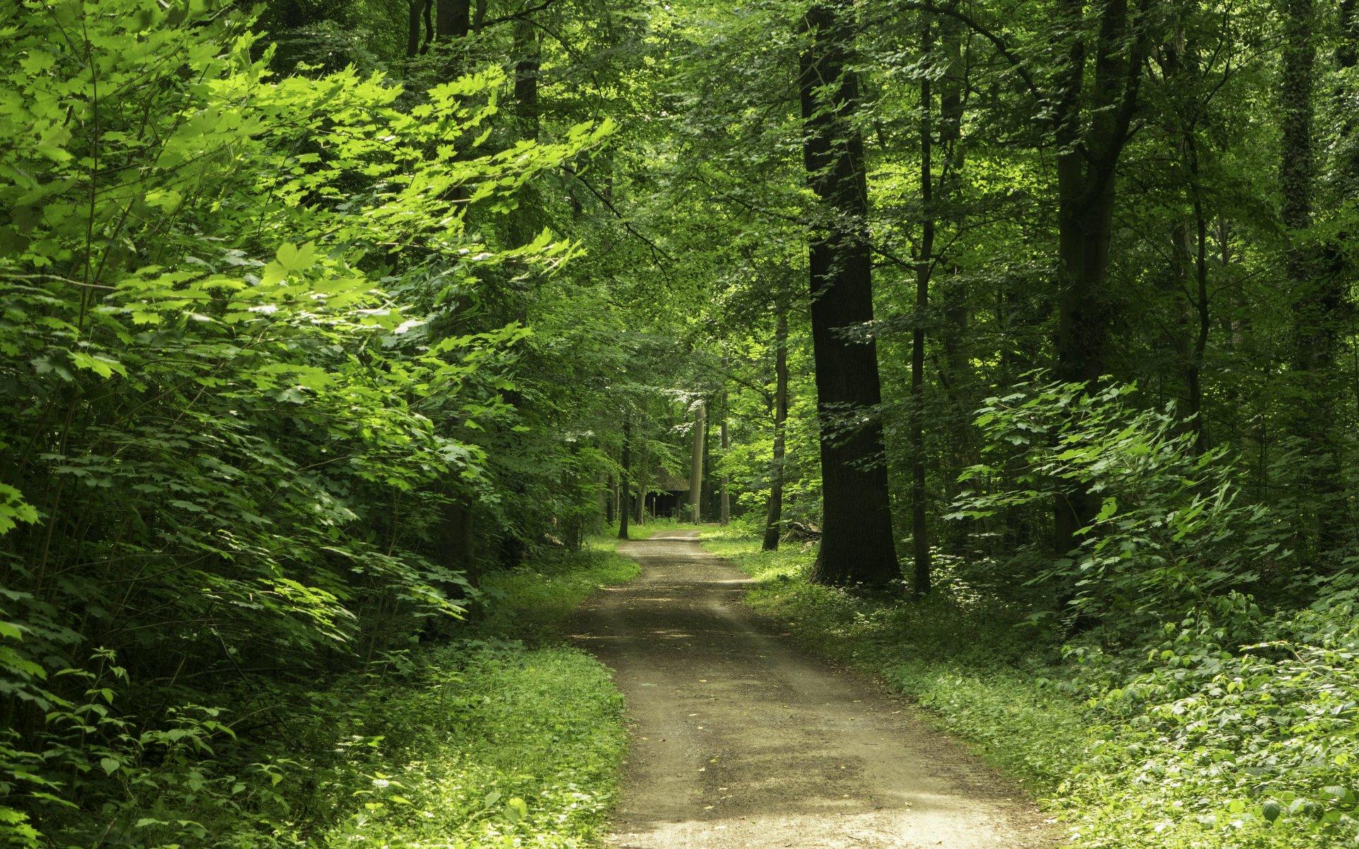 Königseichenweg in der Eilenriede