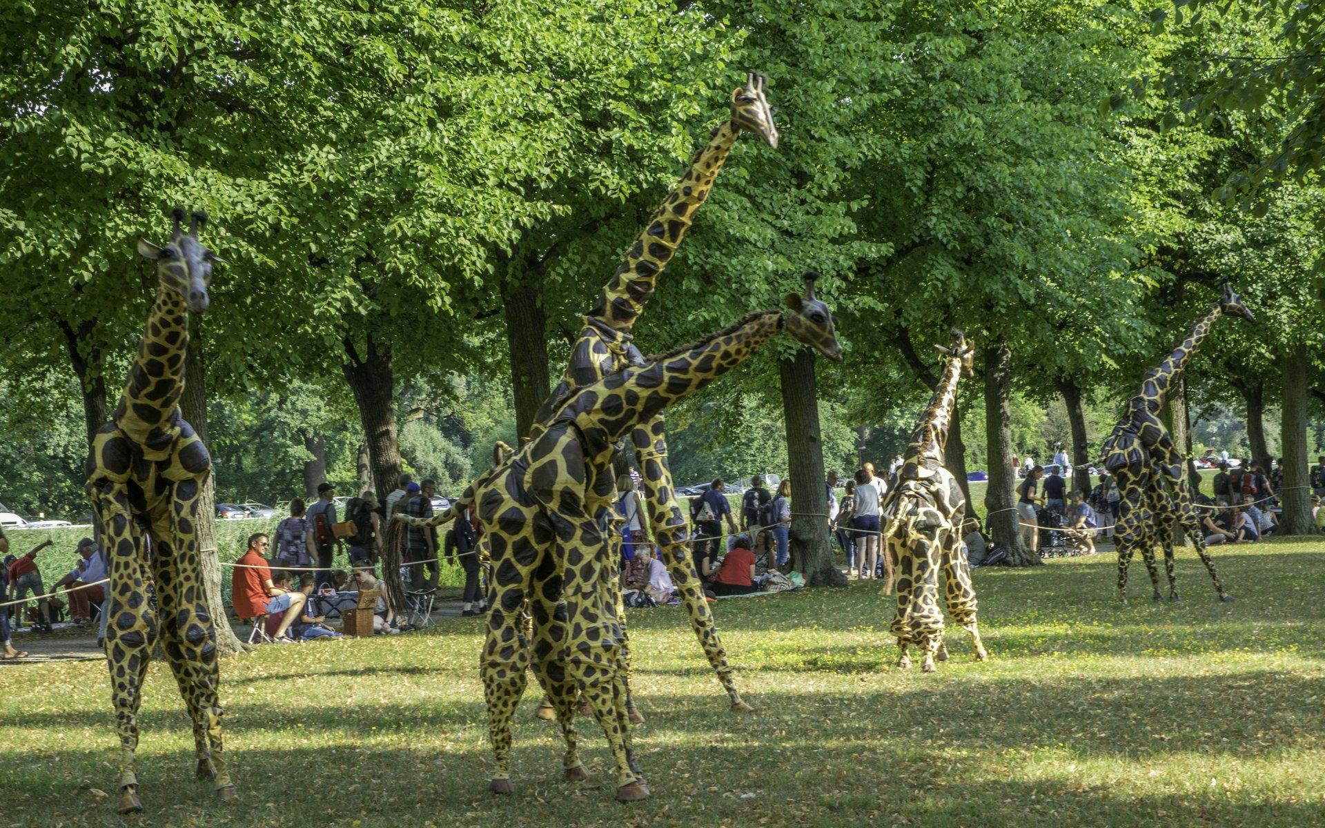 Giraffen von Teatro Pavana