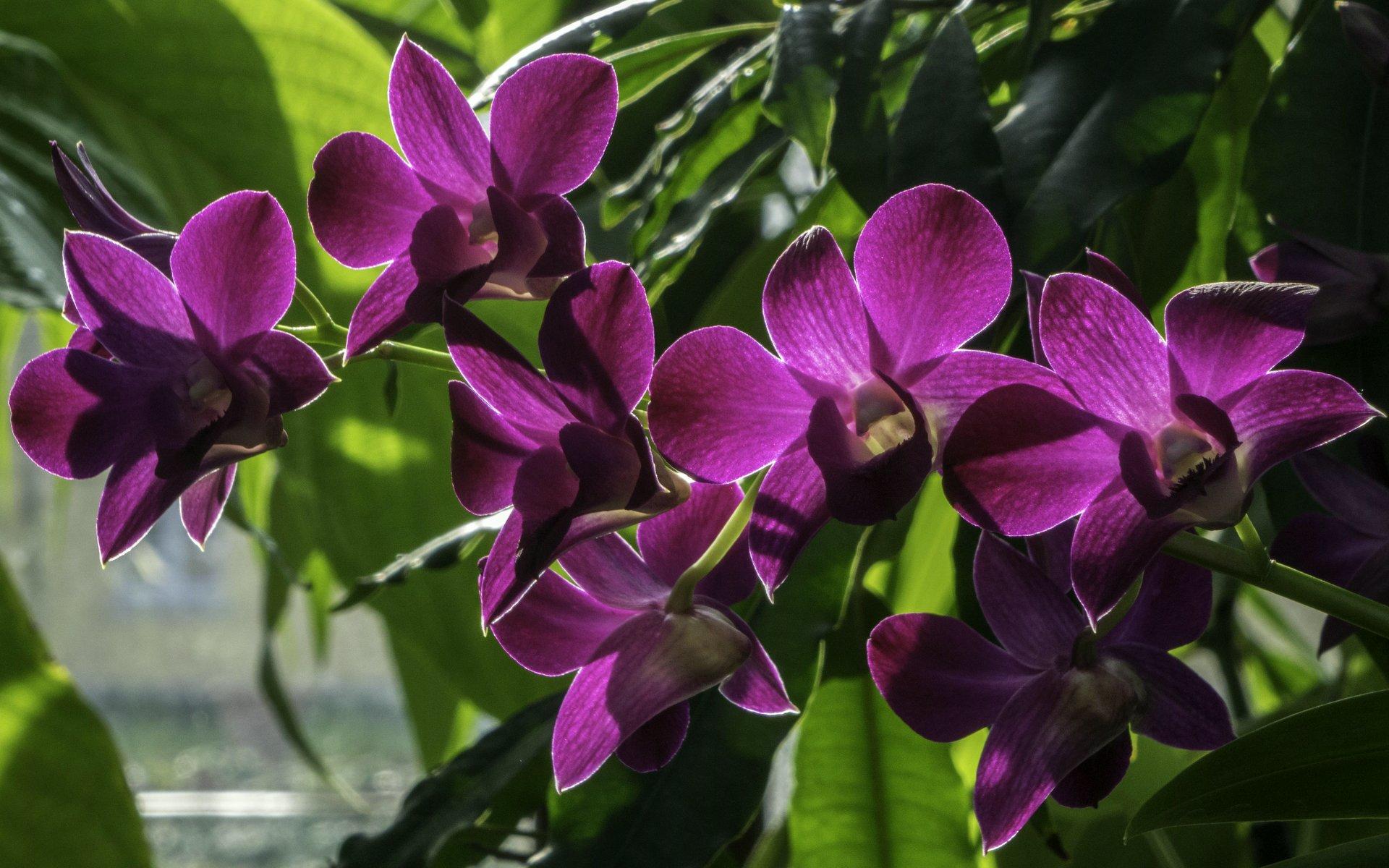 Orchideen im Orchideenhaus im Berggarten