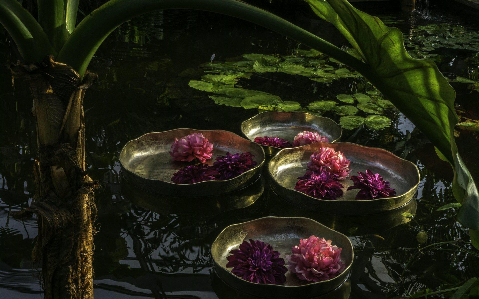 Teich im Tropenschauhaus im Berggarten