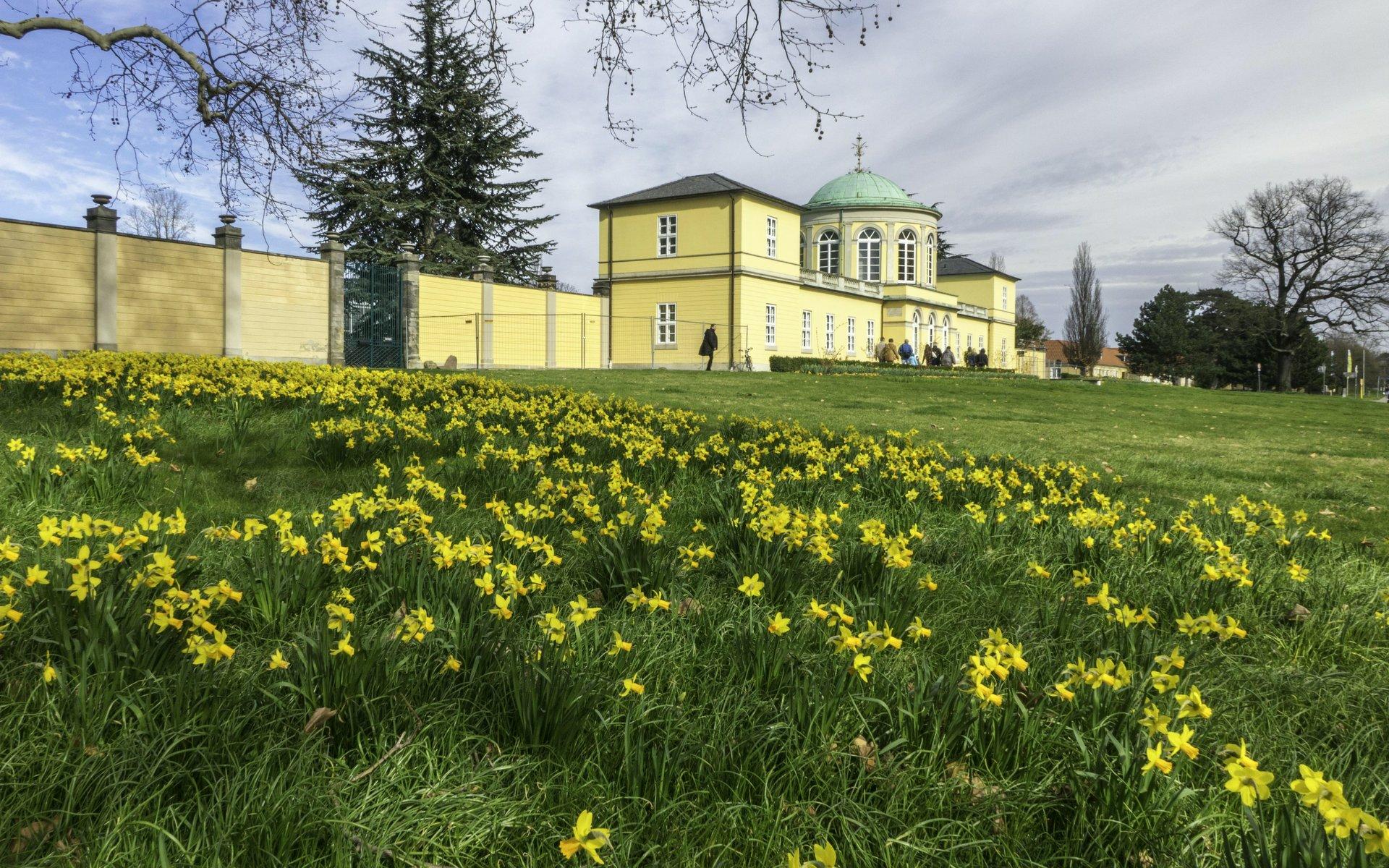 Osterglocken vor dem Bibliothekspavillion vor dem Berggarten