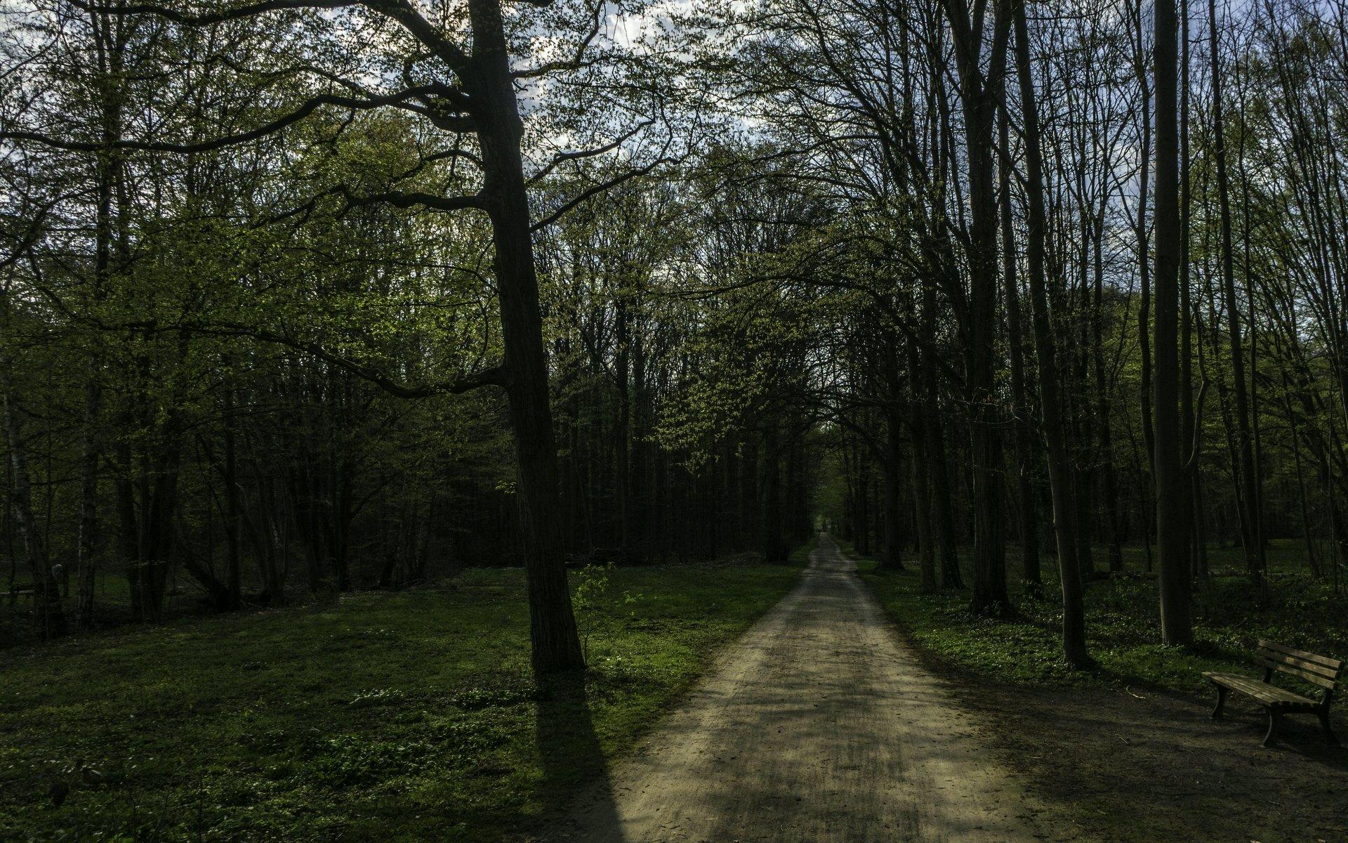 Alter Abfuhrweg in der Eilenriede