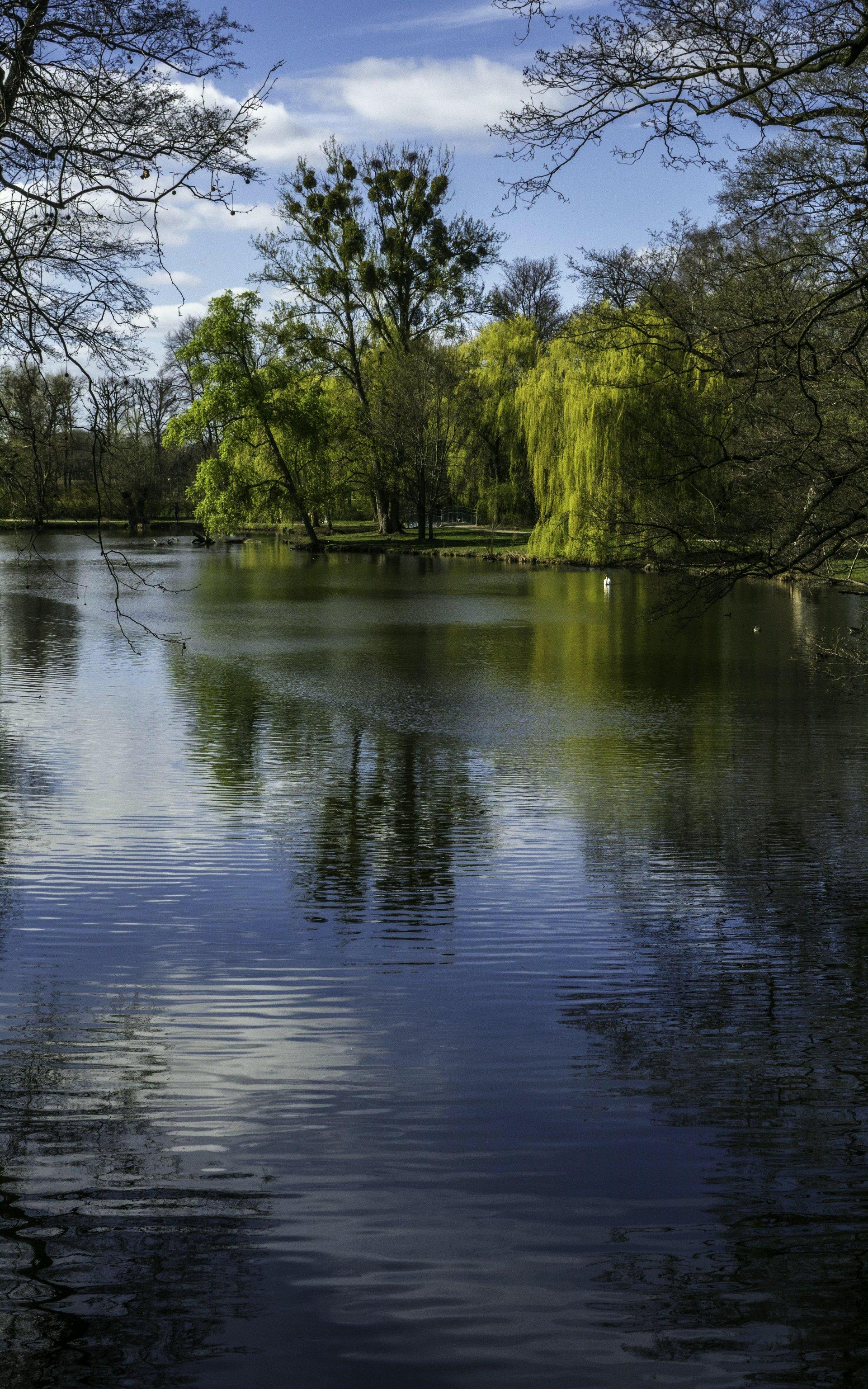 Teich im Georgengarten