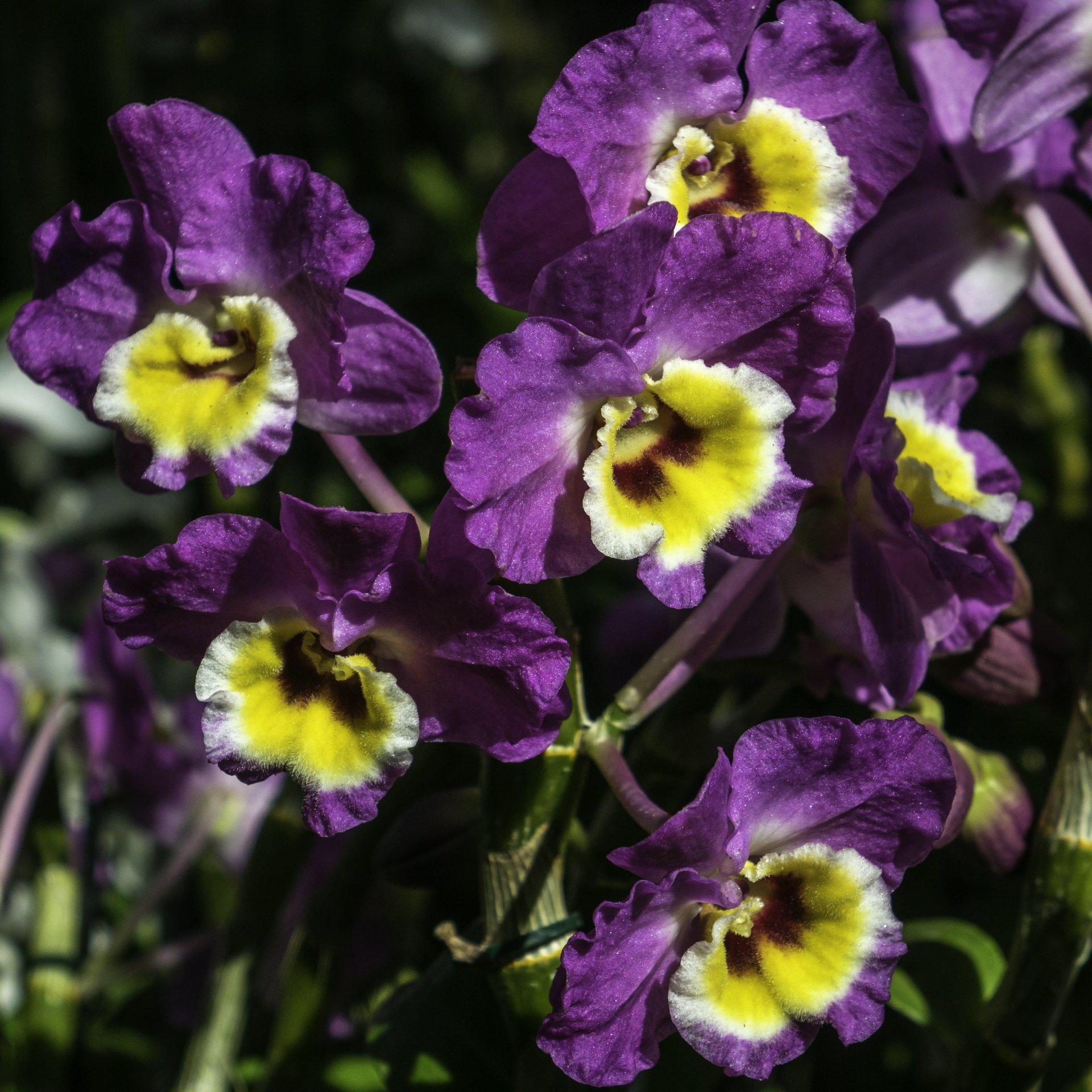 Orchideen im Orchideenhaus des Berggartens
