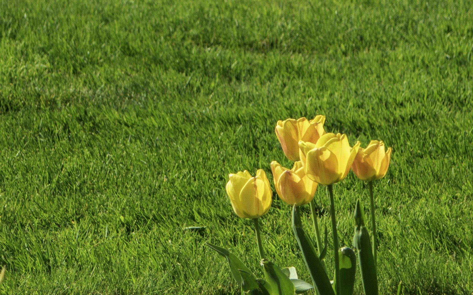 Tulpen bei den Frühlingsblumen im Stadtpark