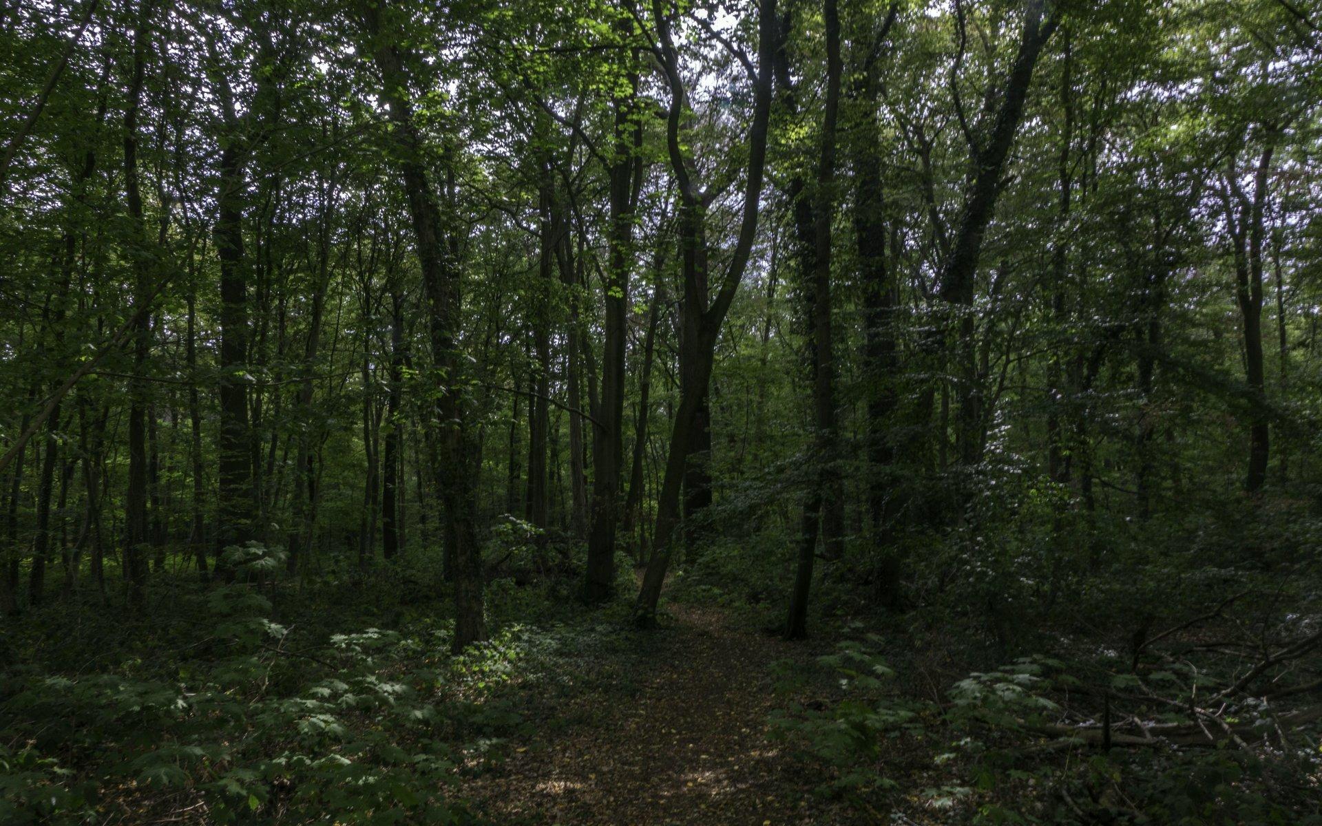 Altholzparzelle in der Eilenriede