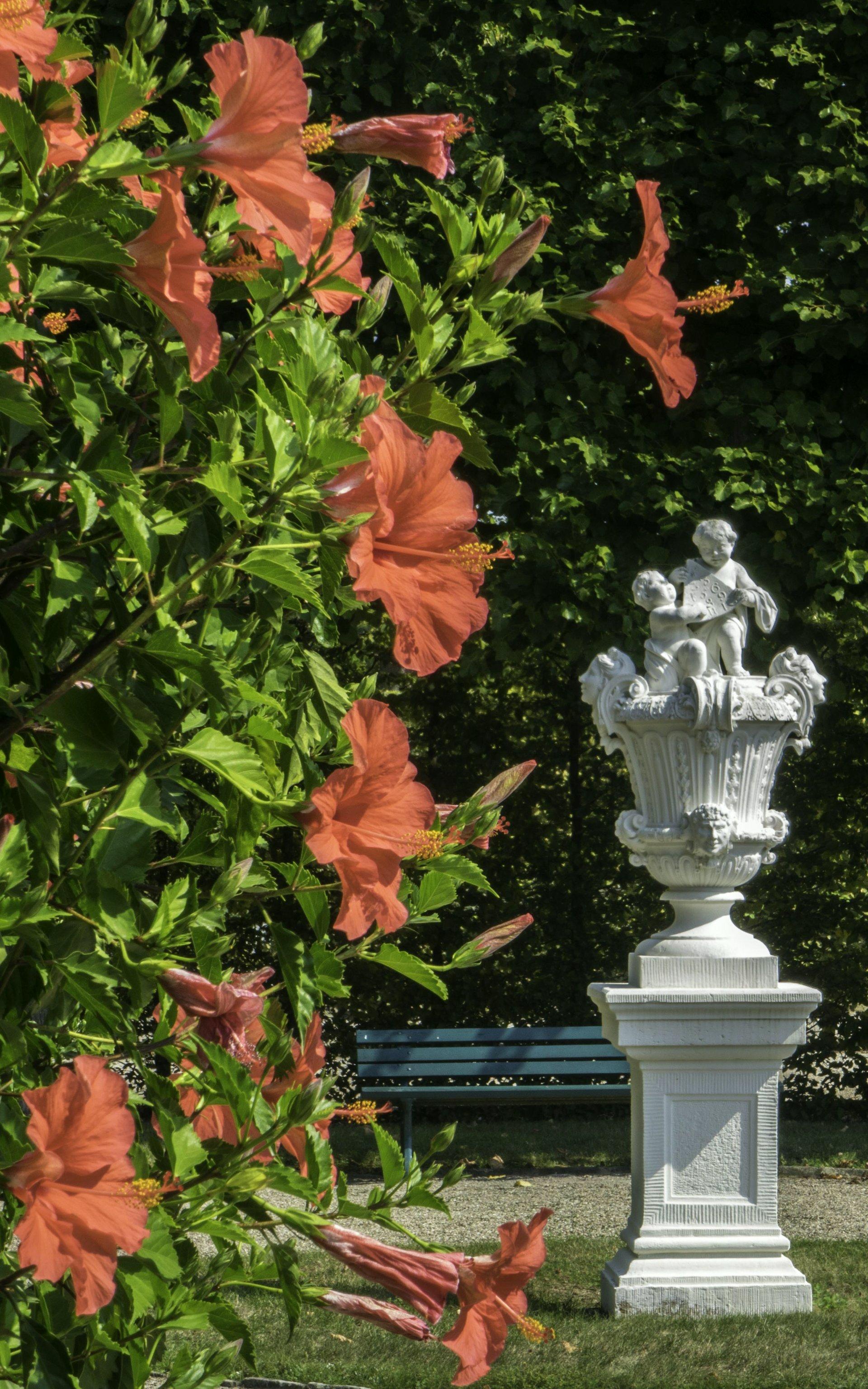 Hibiskus im Königsbusch des Großen Gartens