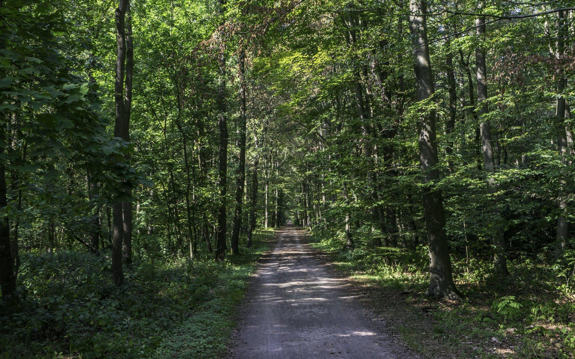 Oelkersweg in der Eilenriede