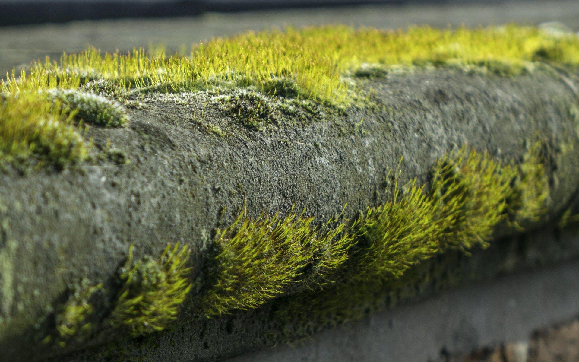 Moos auf der Aussichtsterrasse im Großen Garten