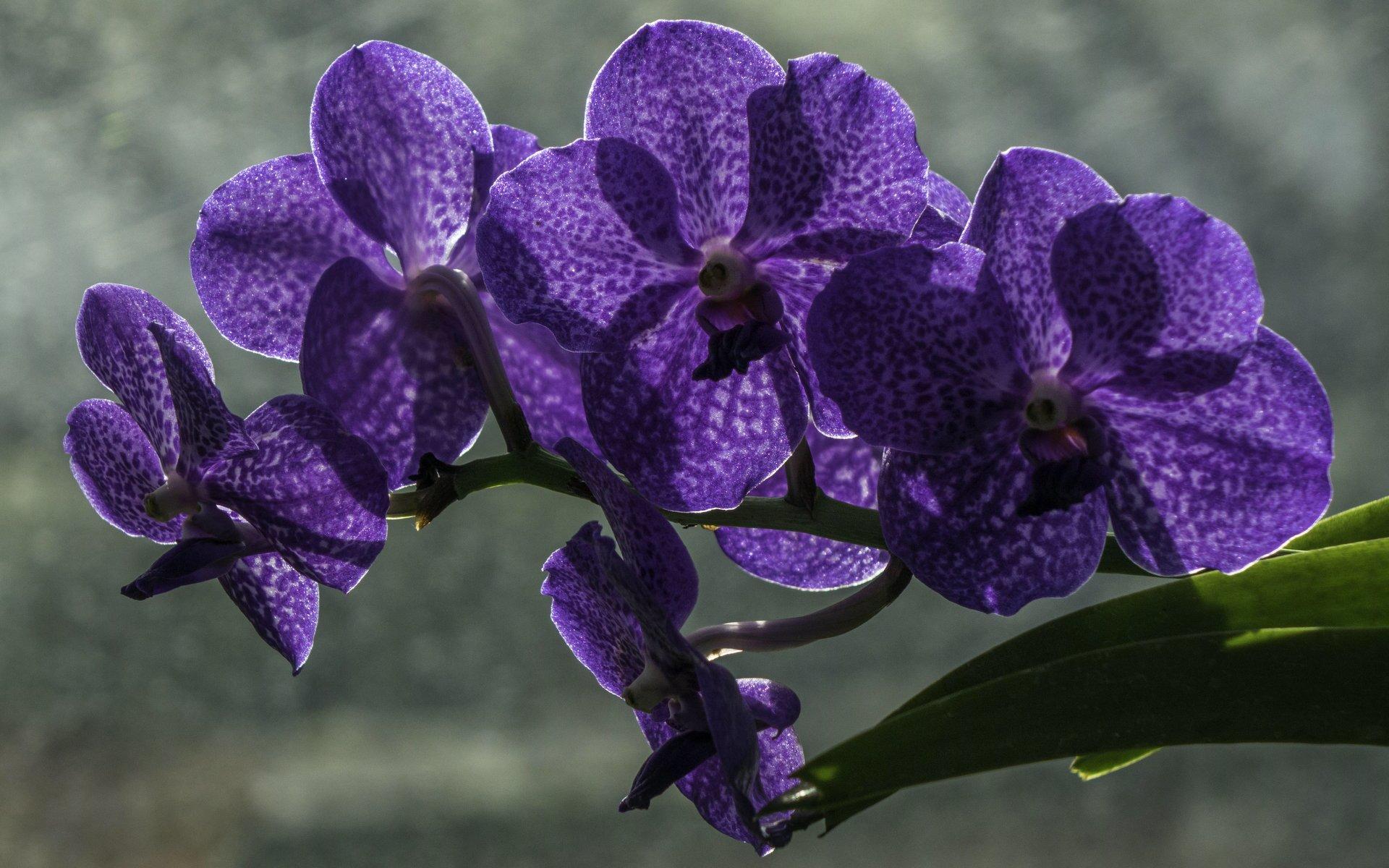 Orchidee im Orchideenhaus des Berggartens
