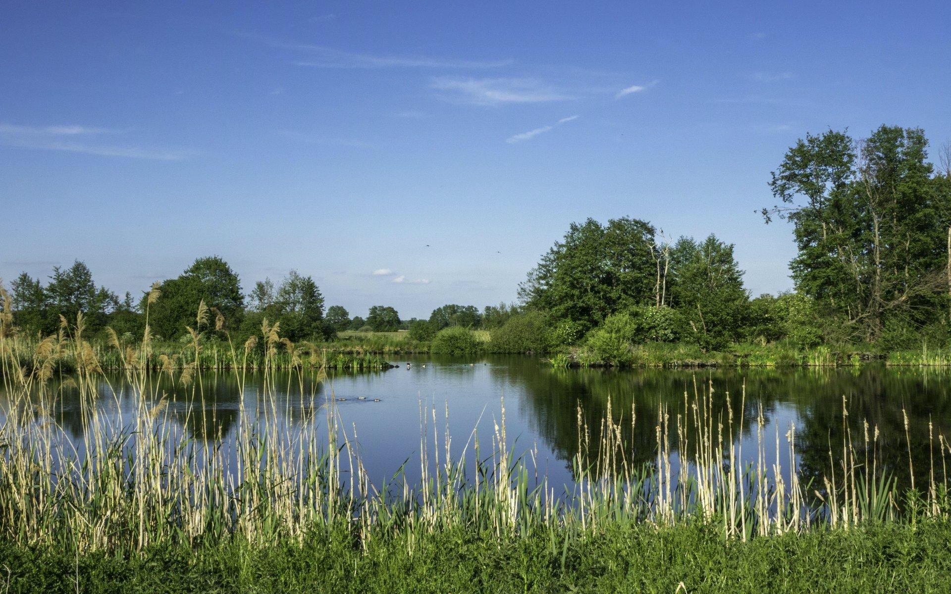 Fischteich am Lüerßendamm bei Hagenburg