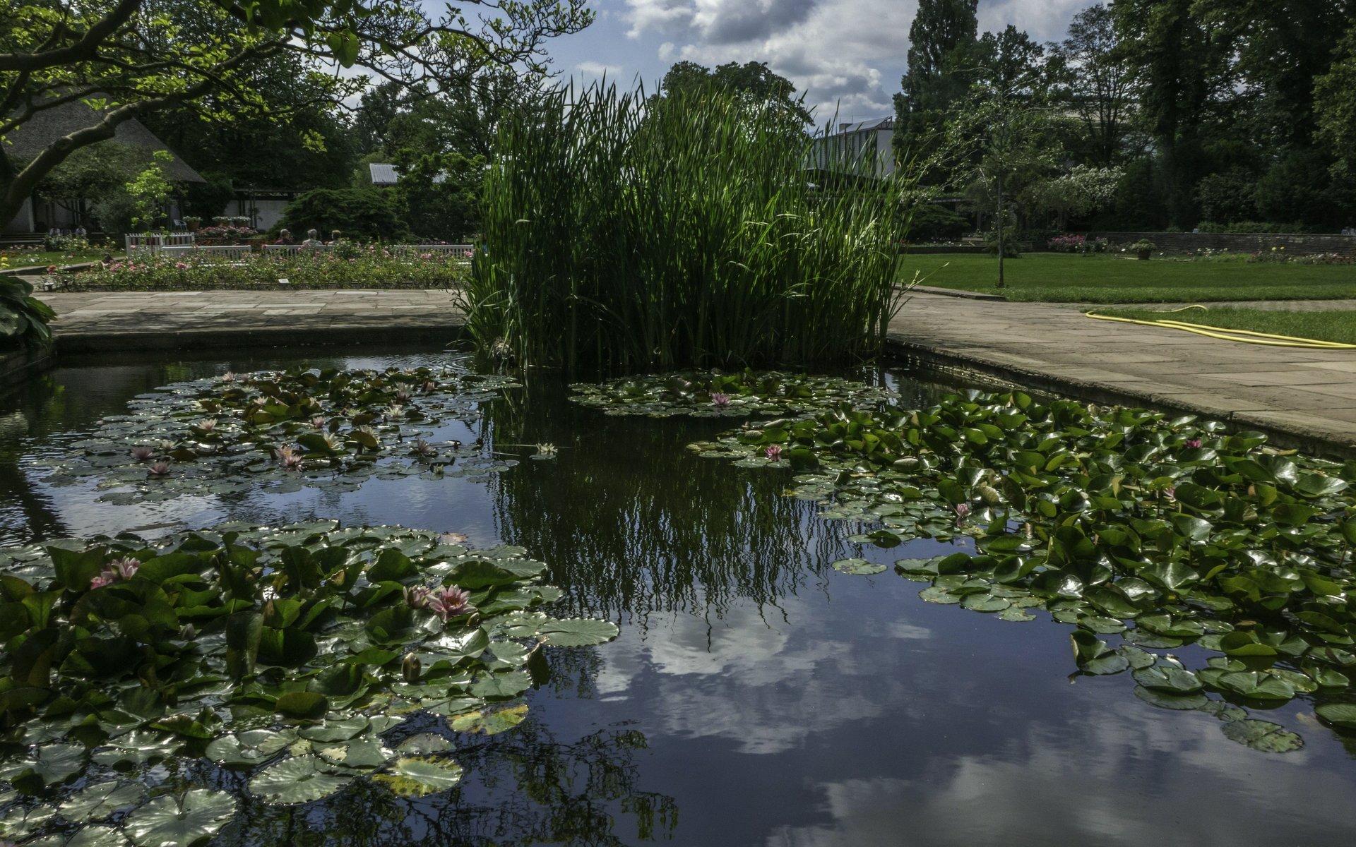 Teich beim Rosengarten im Stadtpark