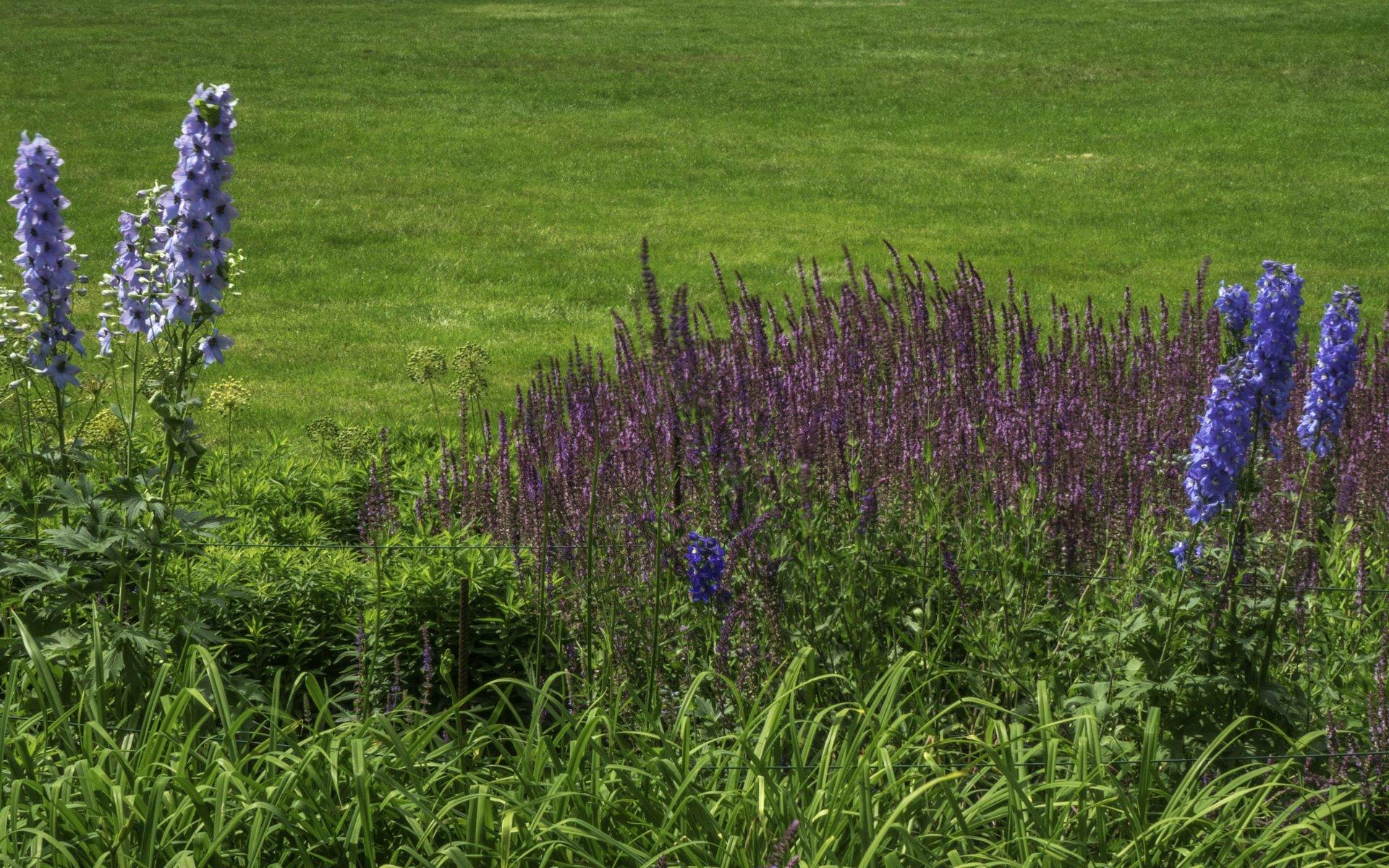 Rittersporn bei den Sommerstauden im Stadtpark