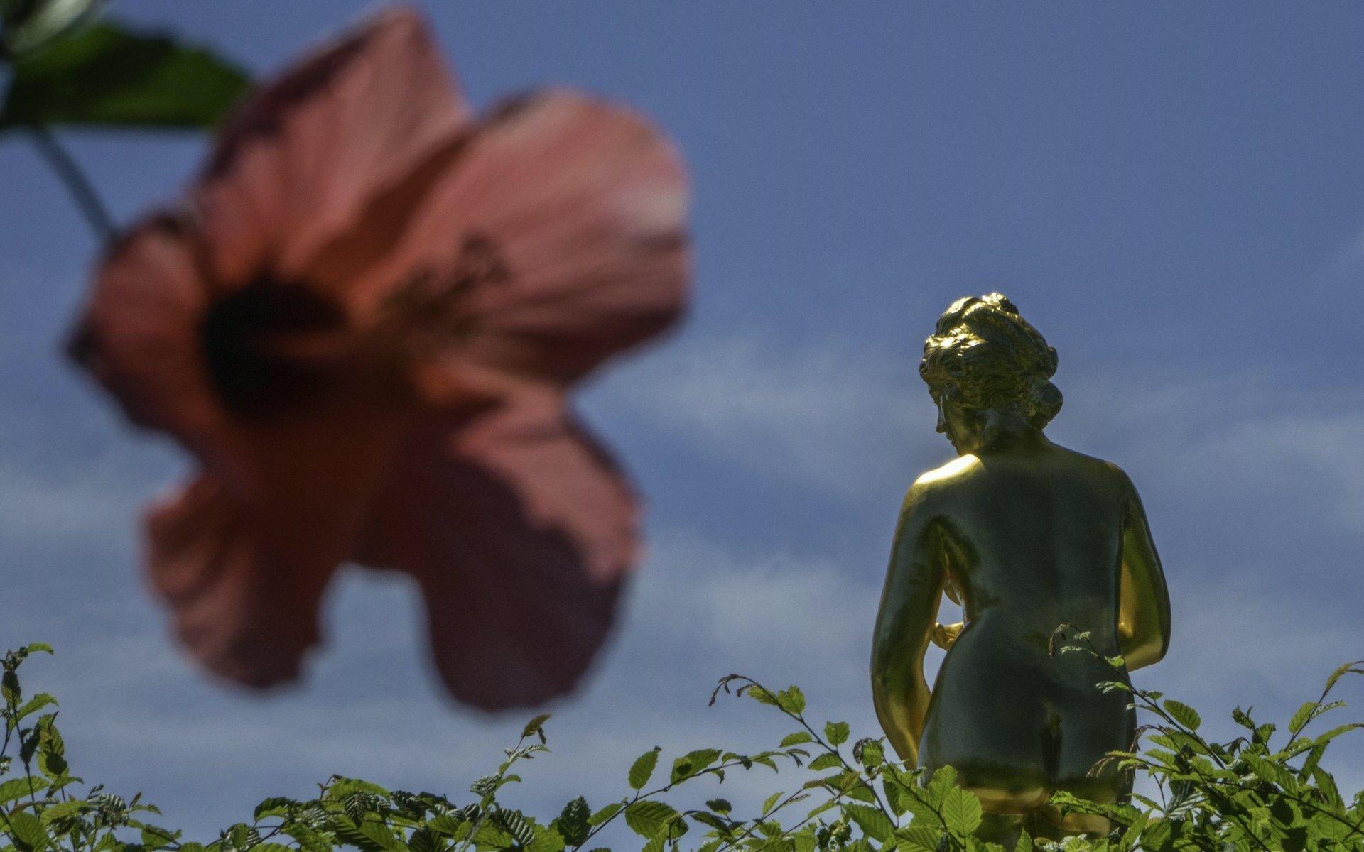 Hibiskus im Königsbusch vor mädchenhafter Venus im Gartentheater im Großen Garten